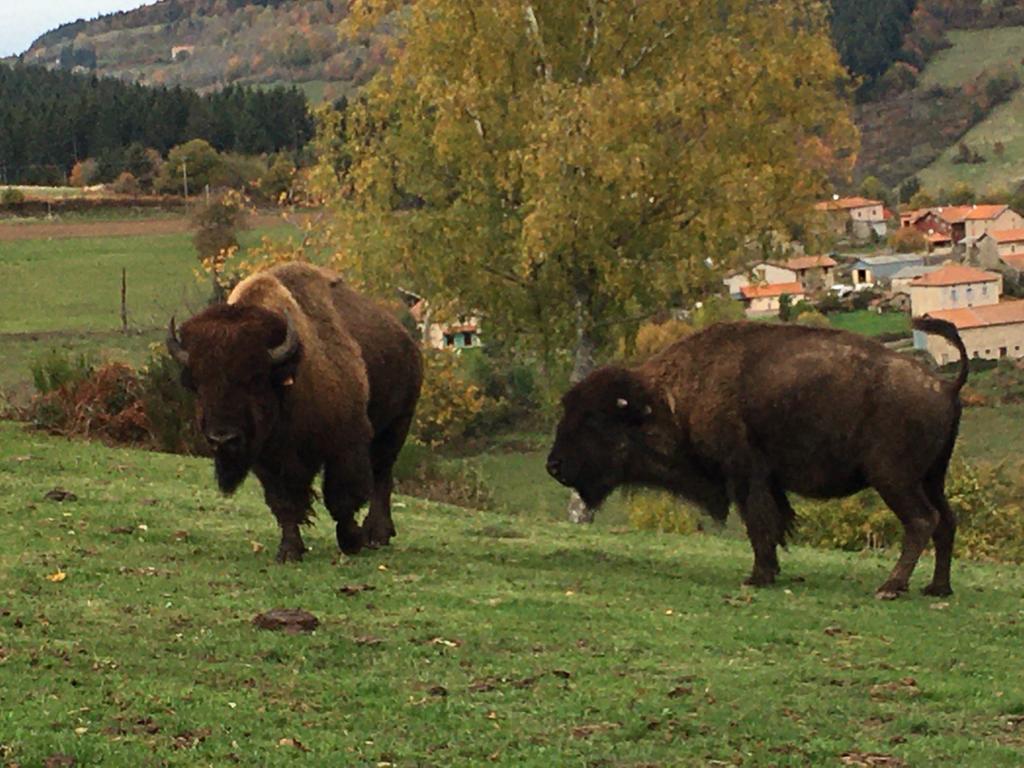 Depuis 25 ans, les bisons sont une véritable passion pour Nicole Mouiller.