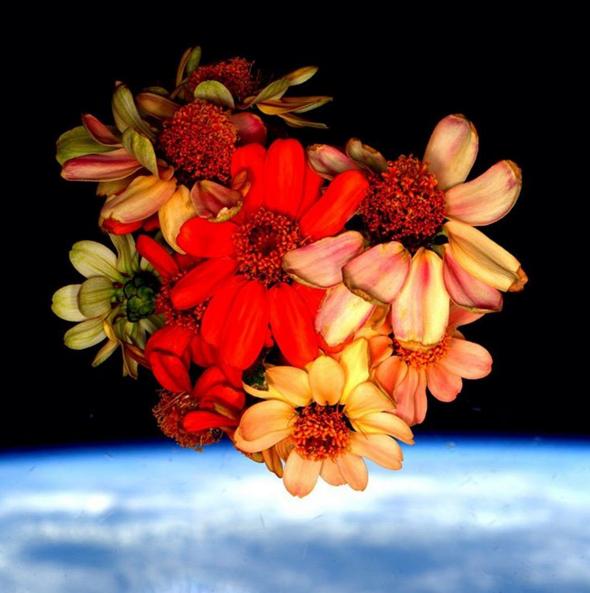Pour la Saint Valentin, Scott Kelly a partagé une photo de fleurs poussées dans l'espace