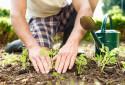 Le jardinage est la deuxième activité en plein air préférée des Français.