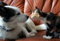 Un foyer sur deux, en France, possède un animal de compagnie