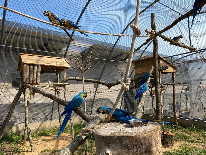 """Des perroquets recueillis par le zoo-refuge de """"La Tanière""""."""
