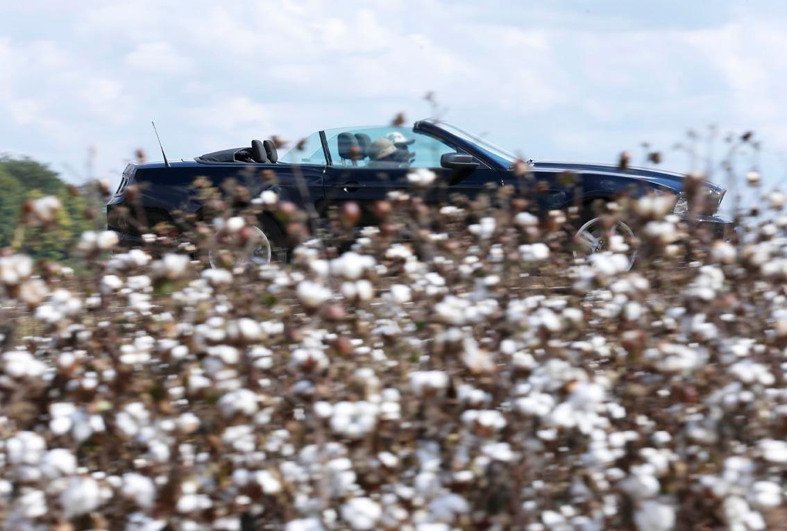La route du blues : Mississippi 100% coton