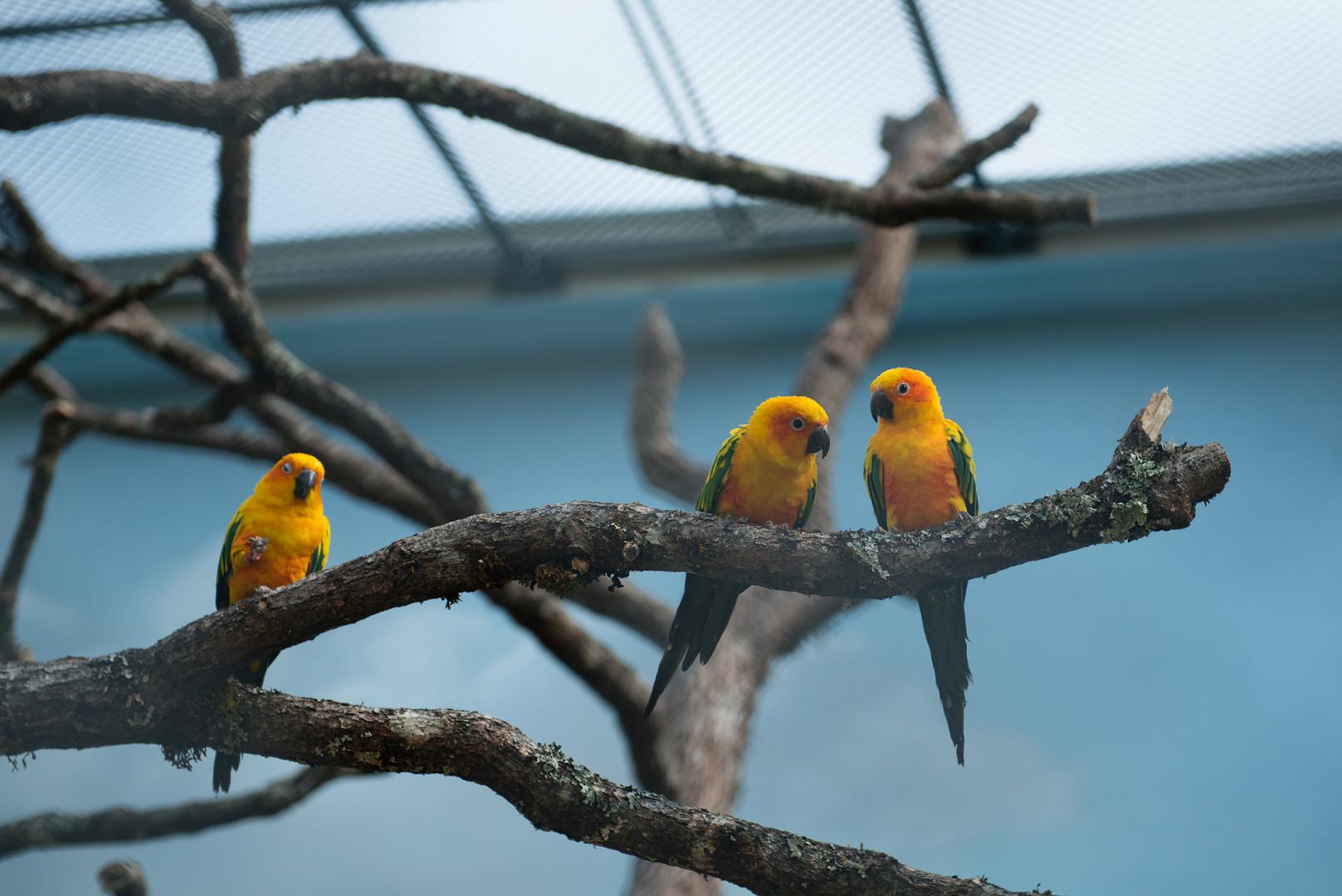 Les visiteurs peuvent y observer 50 espèces d'oiseaux exotiques.