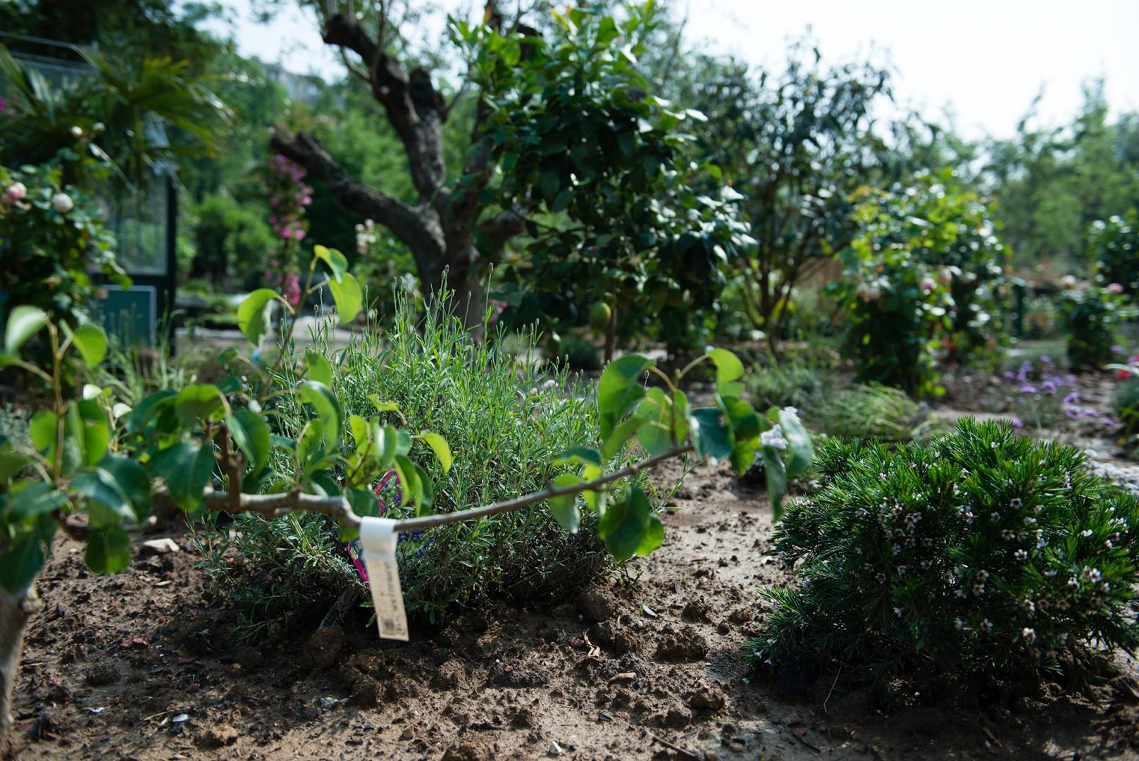 Les 18 hectares du Jardin d'Acclimatation ont été repaysagés.