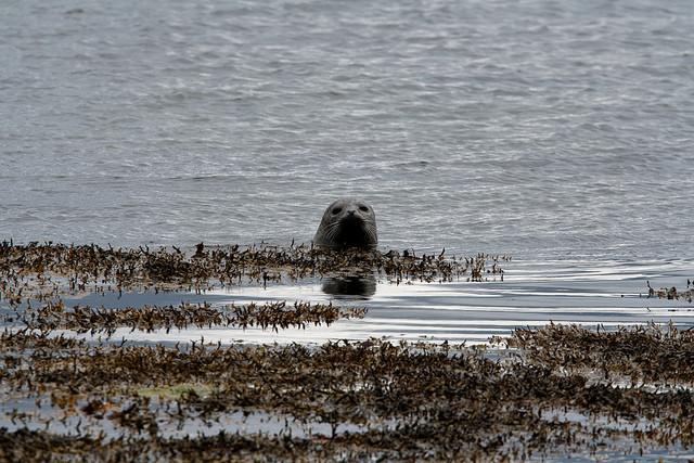 Le phoque moine est l'une des espèces les plus menacées au monde. Le thon rouge, souvent utilisé pour les sushis, appartient aux espèces les plus menacées d'extinction selon Science, une revue scientifique américaine.
