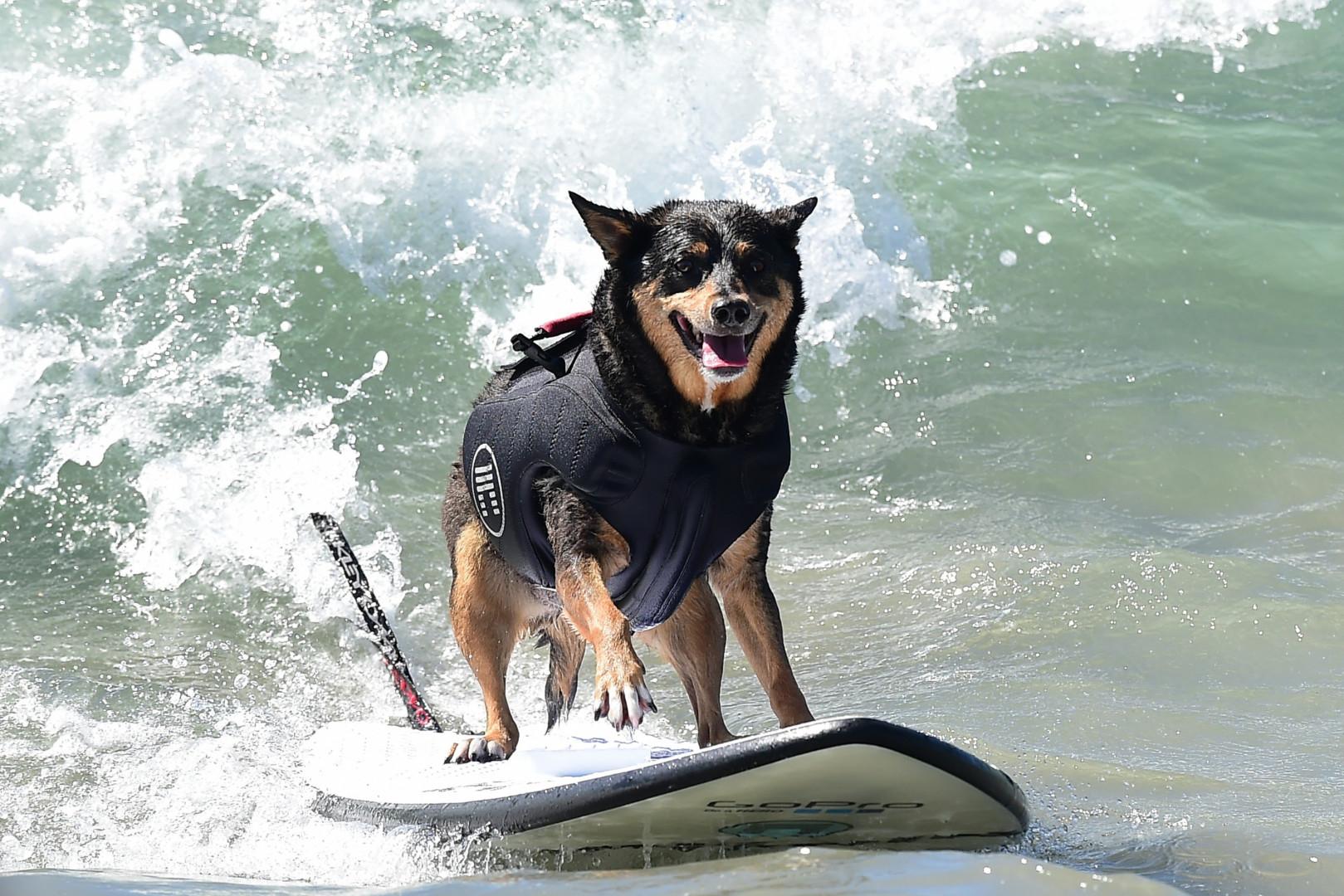 Toutes les races de chiens pouvaient participer