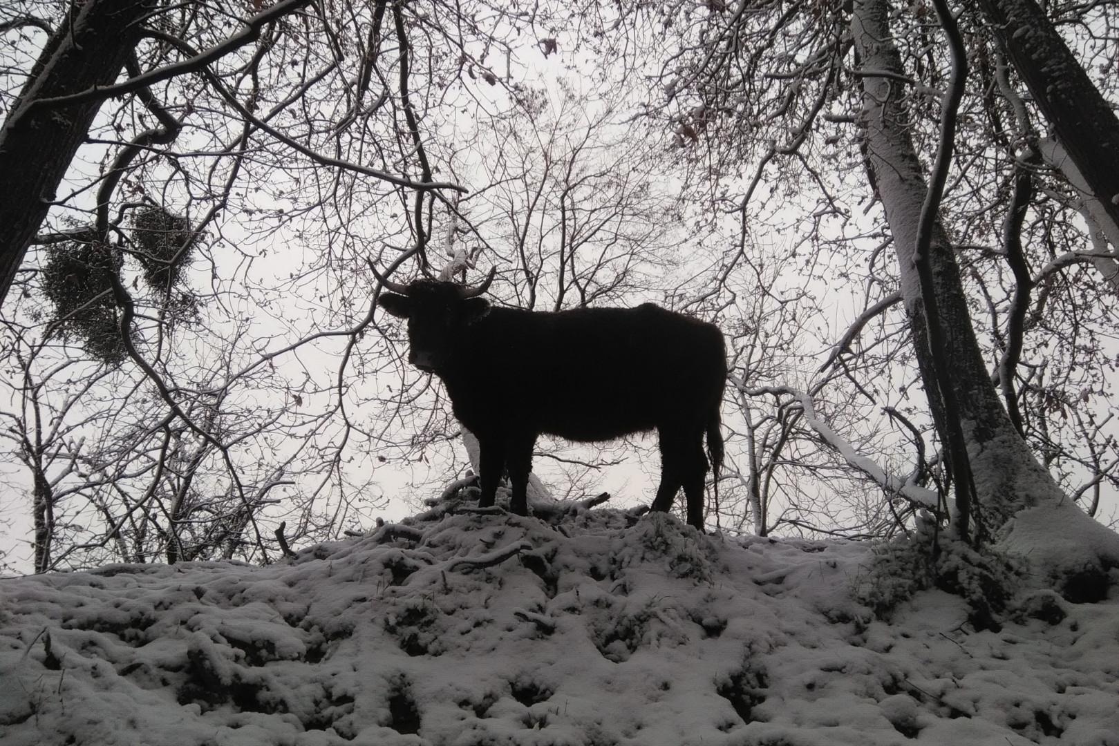 La neige à Arthies (Val-d'Oise) le 5 février 2018
