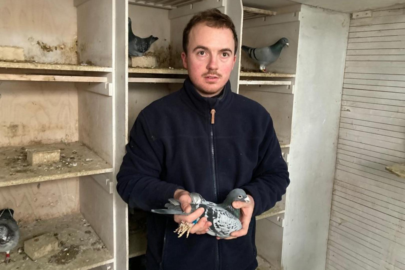 """Tanguy Gervois, """"coulonneaux"""" parmi les meilleurs éleveurs de pigeons de France"""