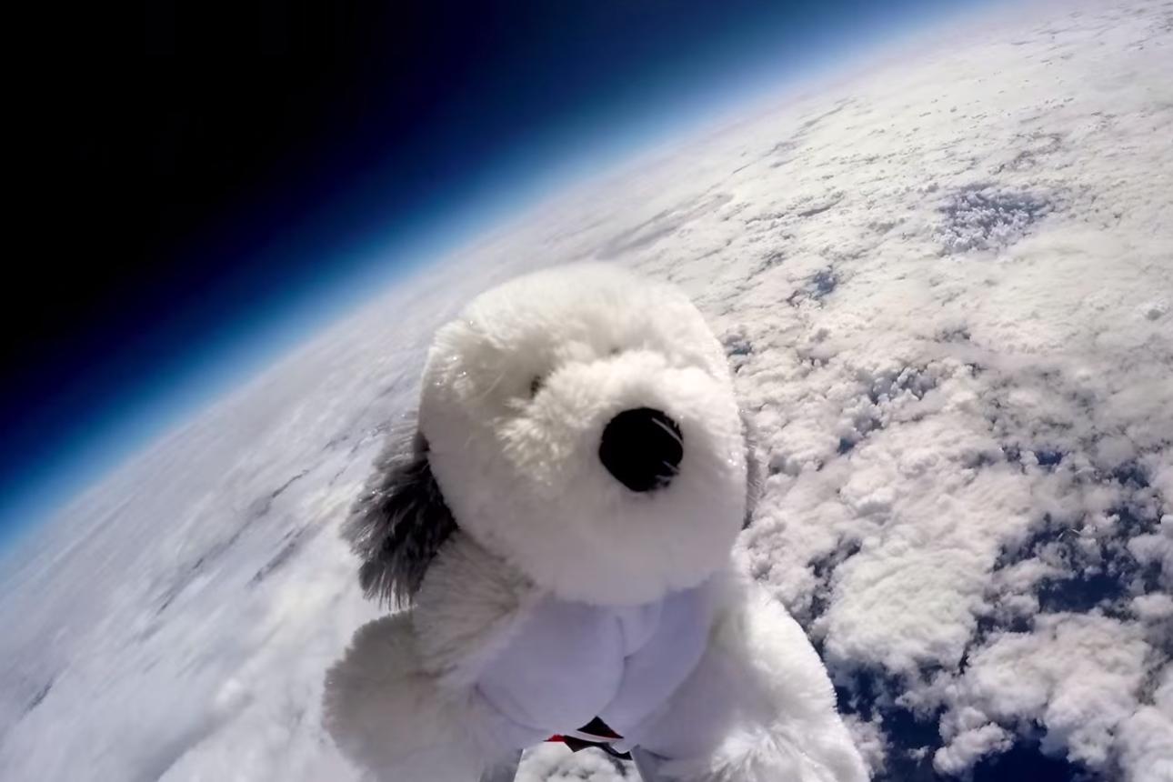 Sam Le chien envoyé dans l'espace pour une expérience scientifique