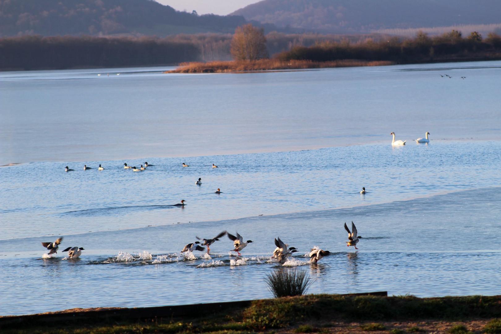 Le lac de Madine en Lorraine.