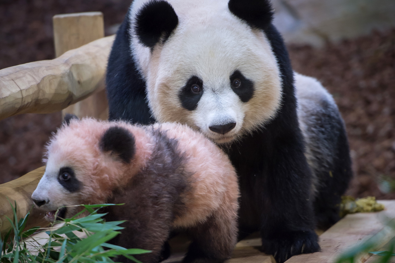 Yuan Meng, à quelques mois, et sa mère