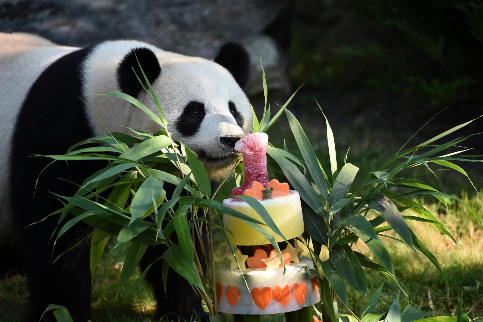 Yuan Meng découvre son gâteau d'anniversaire