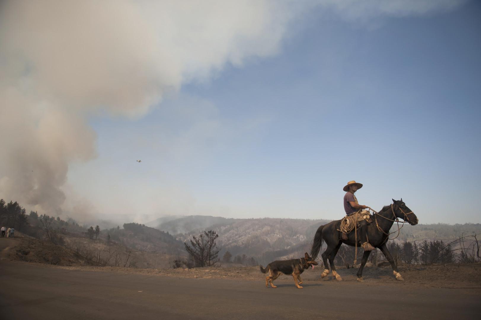 Un Chilien, accompagné de son chien, traverse les zones touchées par l'incendie de forêt pour rentrer chez lui