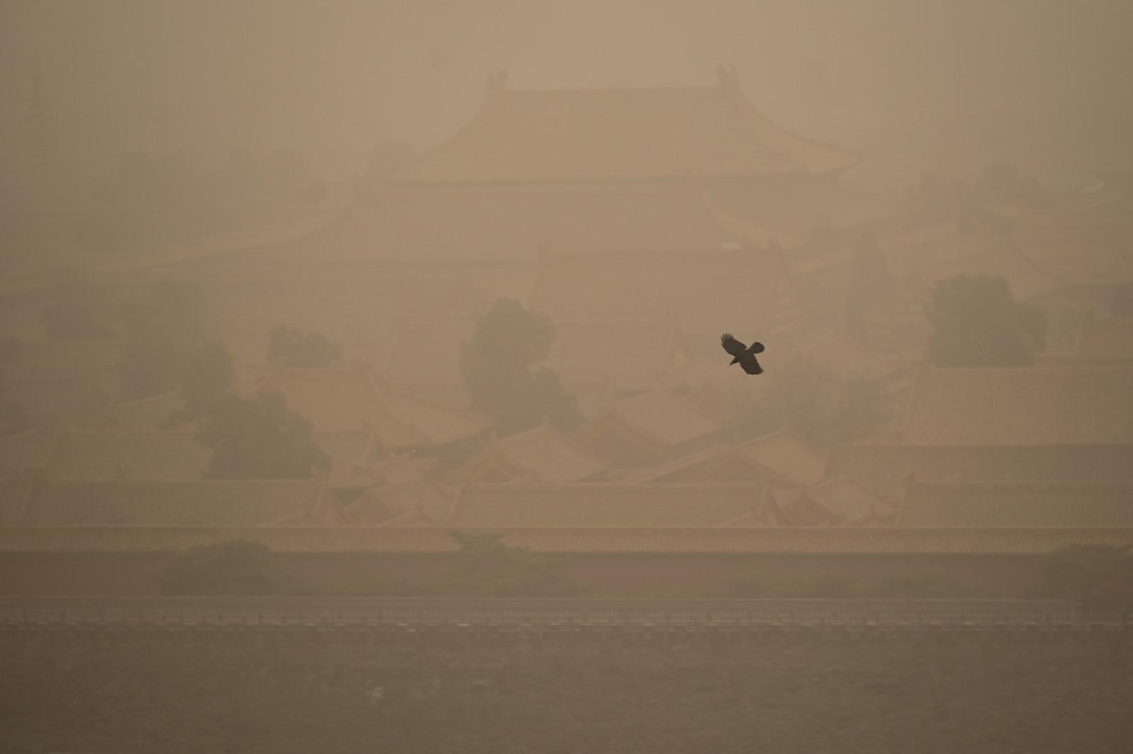 Un corbeau survole la Cité Interdite lors d'une tempête de sable à Pékin le 15 mars 2021.