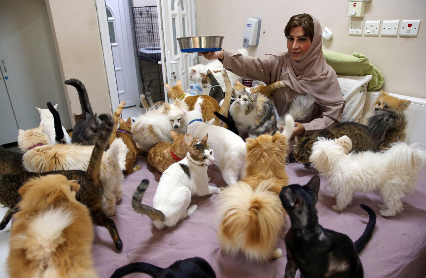 Maryam al-Balushi dépense quelque 6.500 euros par mois pour s'occuper de ces 500 animaux.