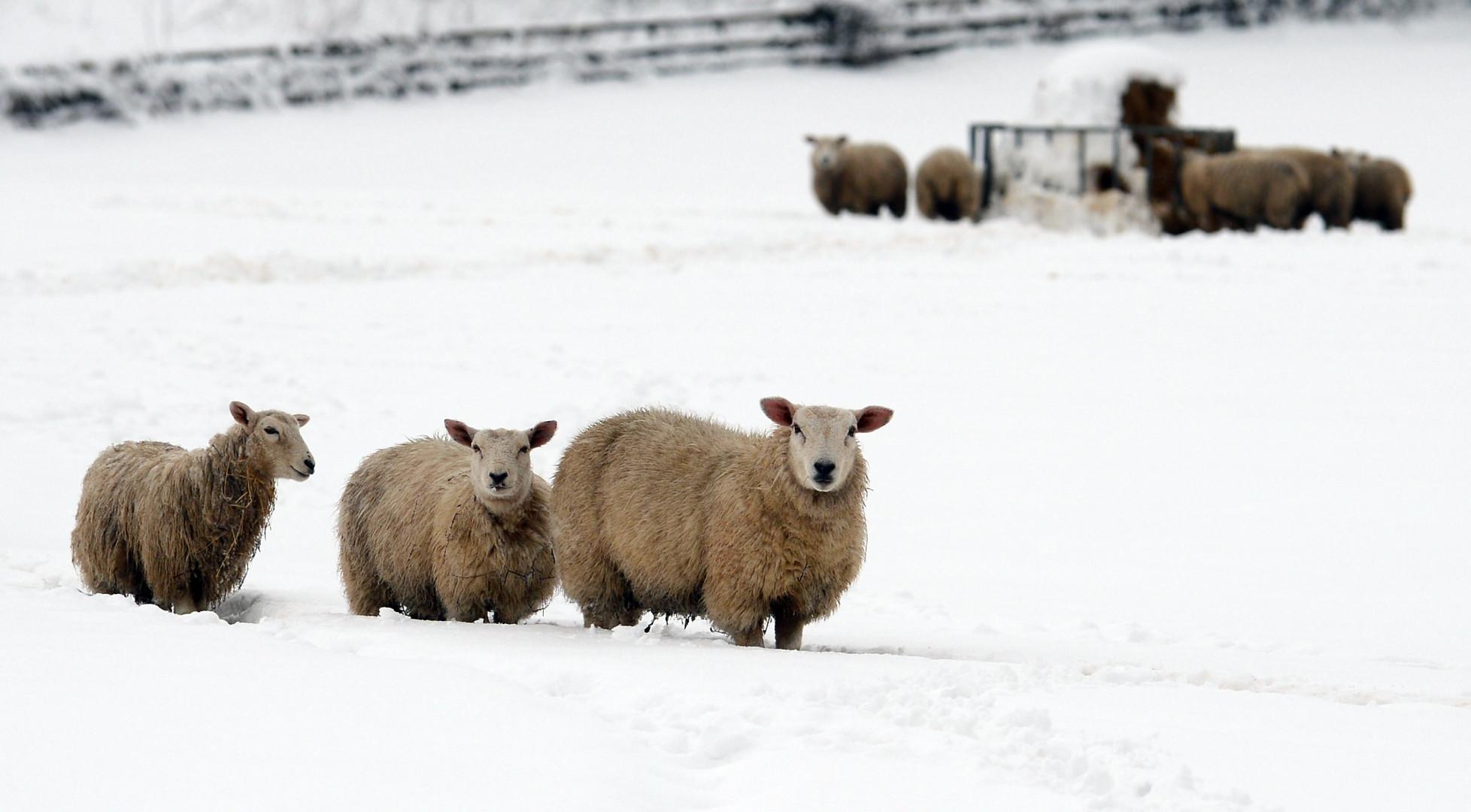 En décembre 2014, dans le comté de Conwy (Pays de Galles), le professeur Gordon Blair, de l'université de Lancaster, a équipé des moutons d'un collier high-tech les transformant en hotspots WiFi mobiles. Le but était d'apporter Internet en rase campagne.