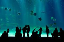 Des visiteurs à l'aquarium Nausicaà, basé à Boulogne-sur-mer (Pas-de-Calais).