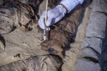 Certaines momies de chat datent de 4.300 ans avant J.-C.