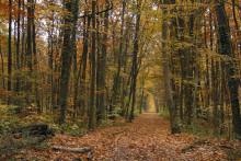 Une forêt (illustration)