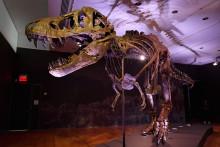 Le T-Rex a été vendu 31,8 milliards de dollars, un record