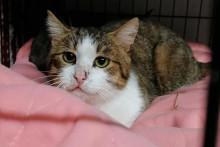 Un chat sauvé d'une maison insalubre à Objat, en Corrèze.
