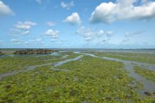 Des algues vertes dans la baie de Saint-Brieuc