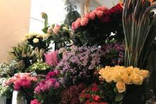 """Des fleurs de chez """"Wax Flower"""""""