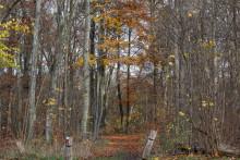 L'exposition imite la forêt à la perfection  (illustration)