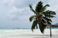 Une vue des Seychelles (illustration)