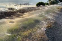 Des toiles d'araignées sont visibles dans cette région australienne