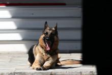 Le chien de Joe Biden est mort à l'âge de 13 ans