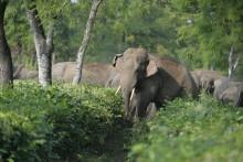 Un troupeau d'éléphants en Inde (illustration)