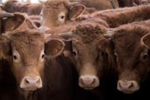 """La maladie de Creutzfeldt-Jakob est plus connue sous le nom de """"maladie de la vache folle"""""""