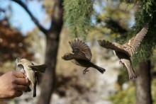 """Les oiseaux des campagnes françaises subissent un """"déclin vertigineux"""""""