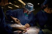Le Dr Robert A. Montgomery, directeur du NYU Langone Transplant Institute, et son équipe ont réussi à attacher temporairement un rein de porc à une personne.