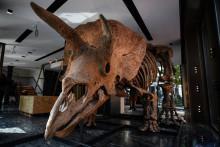 """Le squelette de """"Big John"""" a été vendu 6,6 millions d'euros aux enchères à Paris."""