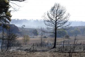 Le paysage réduit en cendres aux alentours de Vitrolles, dans les Bouches-du-Rhône