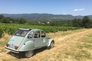 Le Luberon en 2CV, panorama sur le Luberon au milieu des vignes