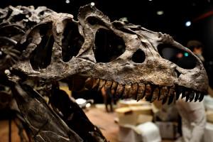 Un fossile de dinosaure (illustration)