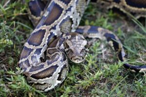 L'animal a été confisqué et à l'heure actuelle, il est hébergé en clinique vétérinaire.