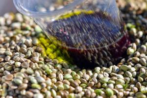 Des graines et de l'huile de chanvre