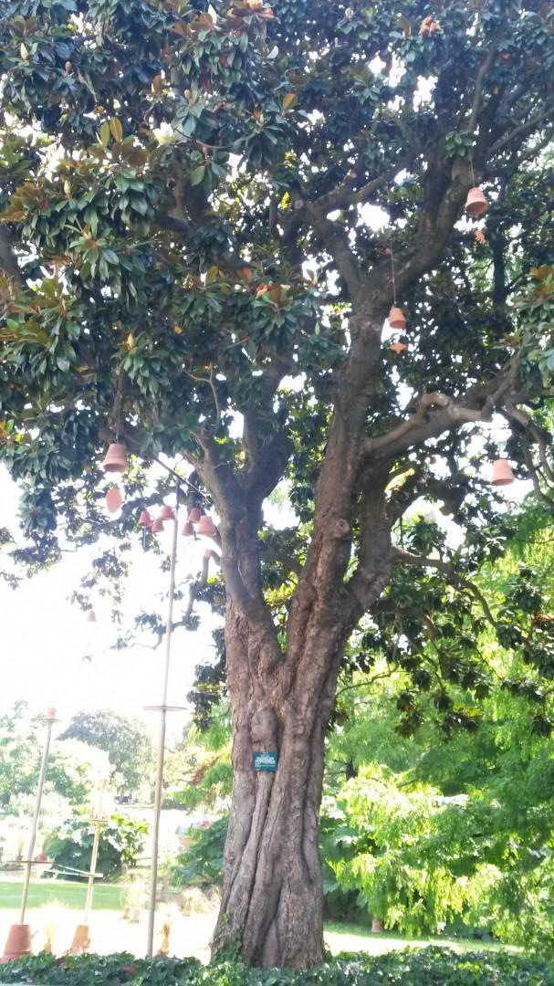 Un arbre à pots
