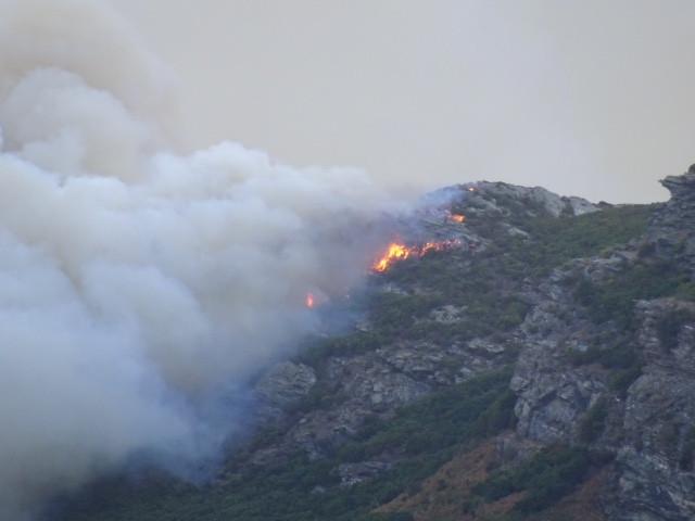 En quelques heures, près de 2.000 hectares ont été ravagés en Haute-Corse