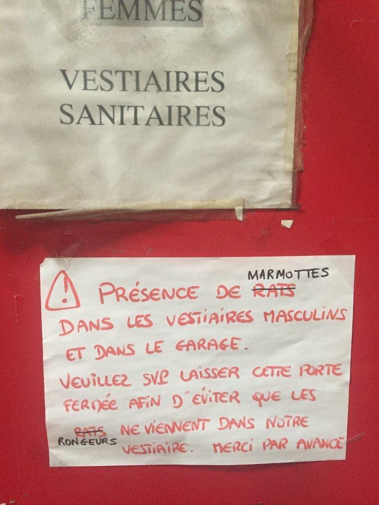 Des rats dans les vestiaires à Marseille