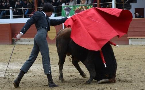 Scène de corrida à Rion-des-Landes, le 24 novembre 2013 (archives)