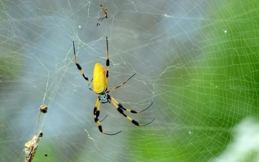 Le fil d'araignée est plus solide que l'acier et aussi souple que le caoutchouc.