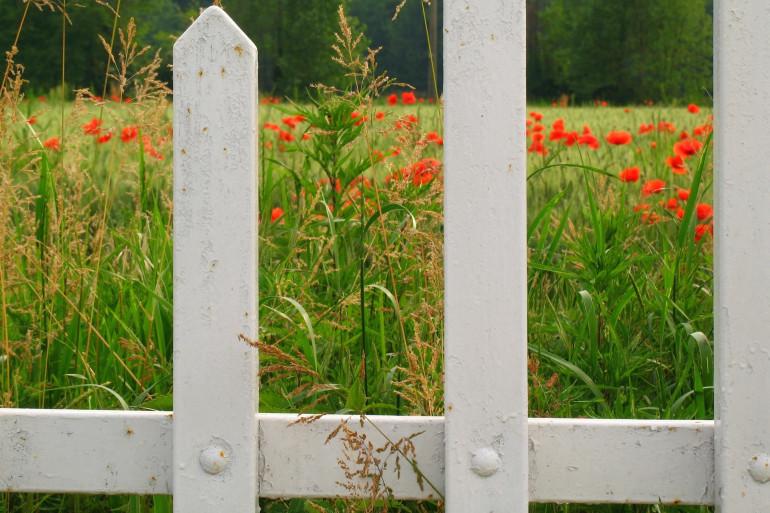 La clôture qui sépare mon terrain de celui du voisin