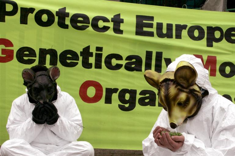 Un nouveau compromis laisse à chaque Etat membres de l'UE le choix d'interdire ou non la culture des OGM (photo d'illustration).