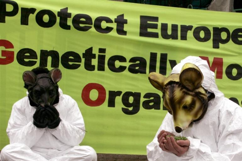 Un nouveau compromis laisserait à chaque Etat membre de l'UE le choix d'autoriser ou non la culture des OGM (photo d'illustration).