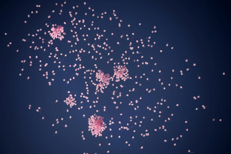 Un lâcher de ballons (image d'illustration)